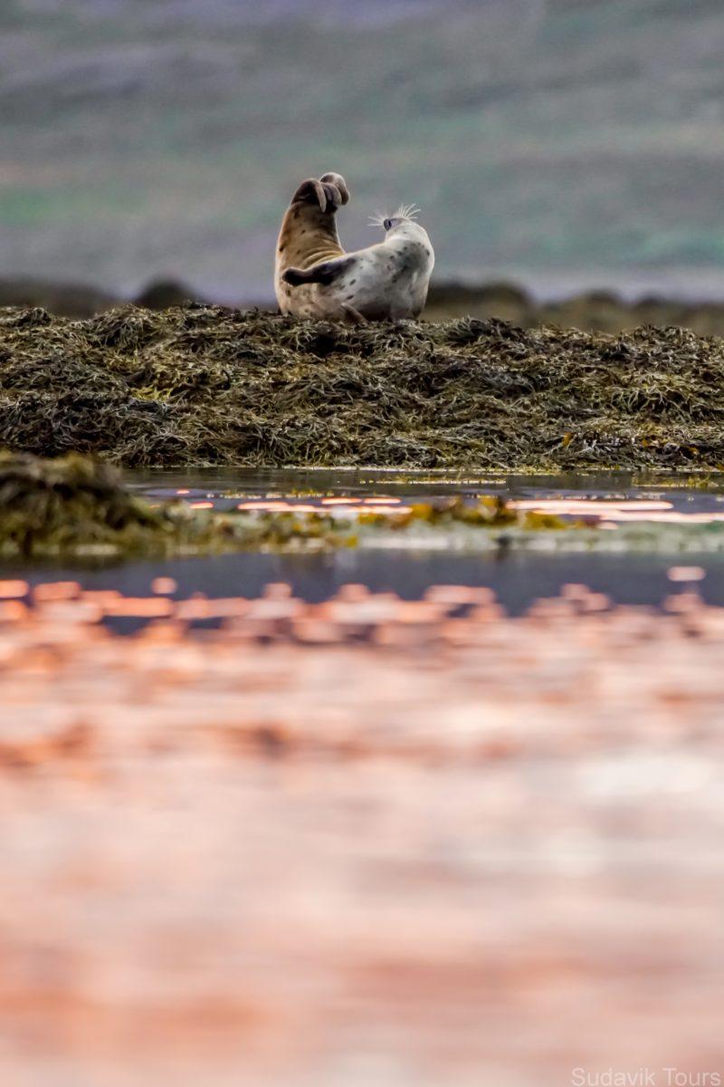 Seal and sunrise
